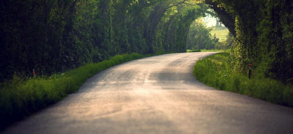 tree-road-800-2