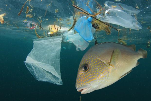 Koniec ery plastiku. Zakaz w Unii Europejskiej od 2021 r
