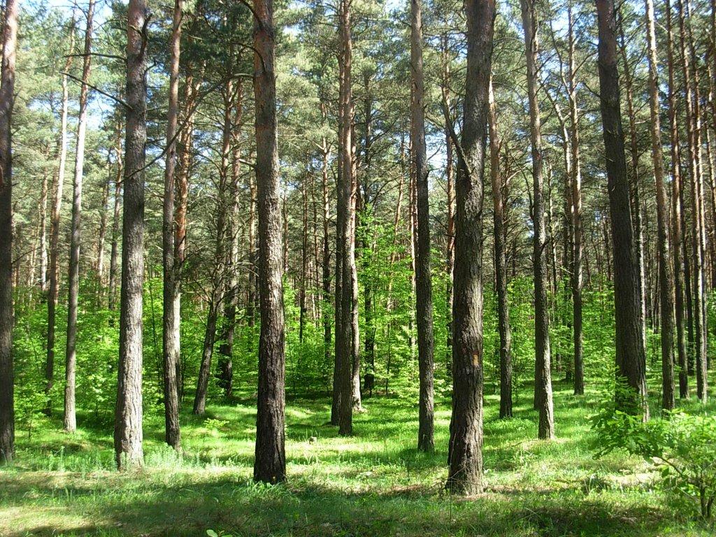 W zgodzie z naturą – LIFE+ dla Lasów Janowskich